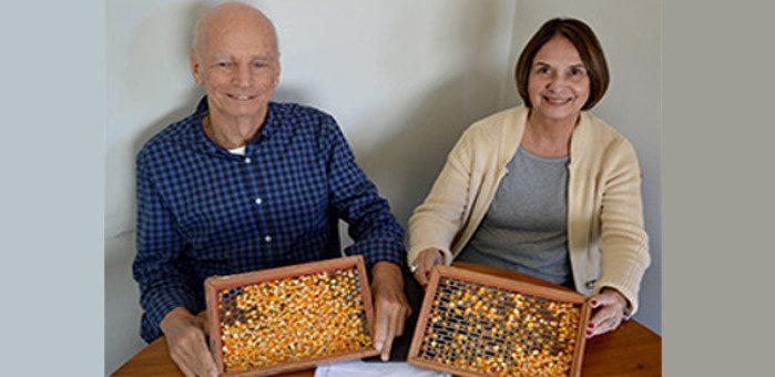 Licenciada da Embrapa comercializará sementes de milho orgânico
