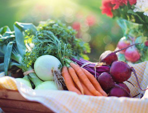 Governo quer aumentar consumo de alimentos orgânicos em escolas