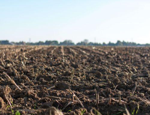A importância do solo na cultura orgânica
