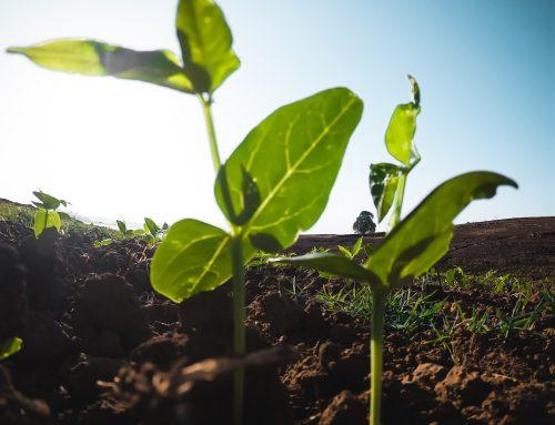 Bayer Lança Produtos para Proteção Biológica em Culturas Sustentáveis