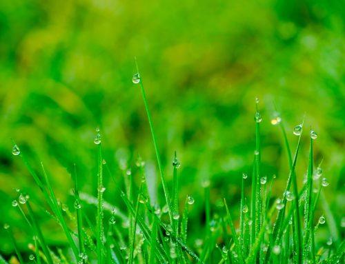 Início das Chuvas no Cerrado: É hora de plantar!