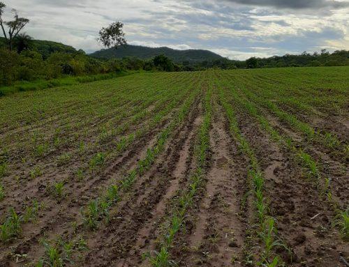 Agricultura pós-química?