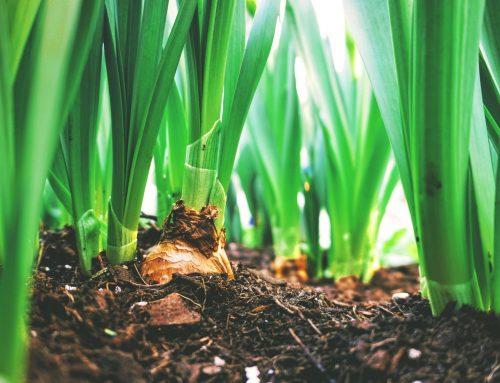 O Papel da Agricultura Sustentável